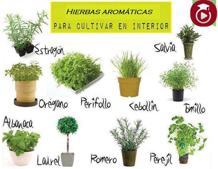 plantas aromaticas pesquisa do google plantas