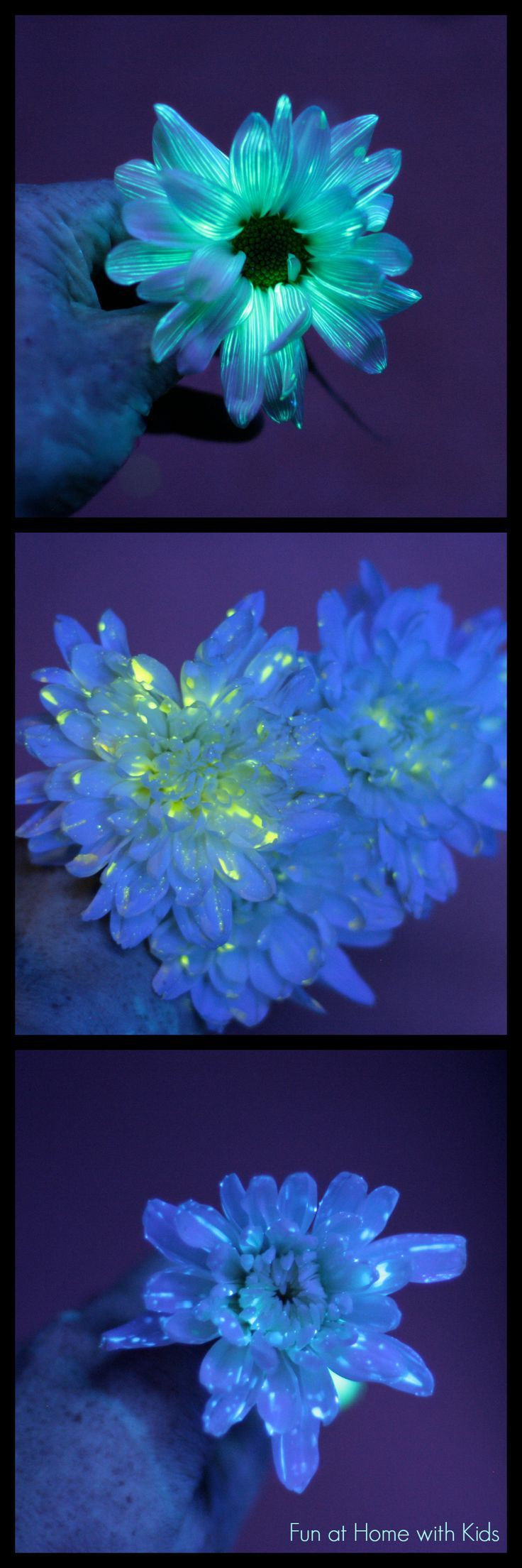 Three different methods of making gorgeous glowing flowers - such a fun twist on the traditional science experiment from Fun at Home with Kids
