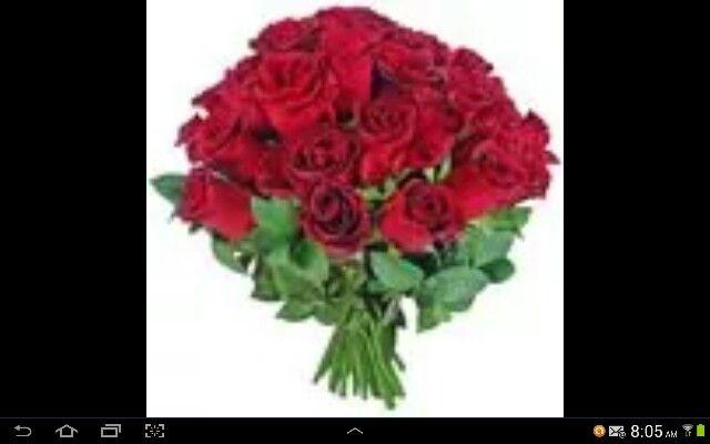 Rosas simplesmente rosas