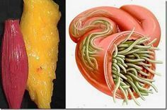 Just Use These 2 Ingredients To Empty All Deposits Of Fat And Parasites Of Your Body Without Effort!