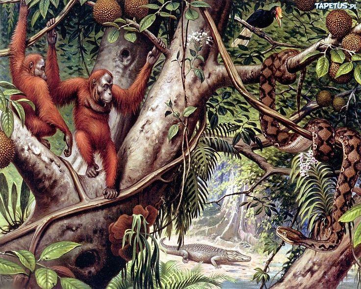 Małpy, Orangutany, Dżungla, Liany
