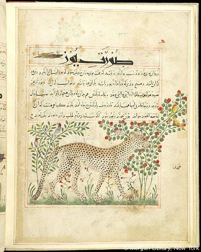Bestiary, Cheetah in right profile; in background, birds in flowering trees.- The Morgan Library & Museum