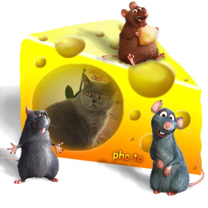 The mouse trap...
