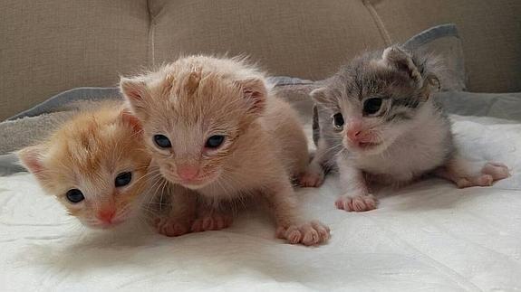 Los tres gatitos han sido rescatados.