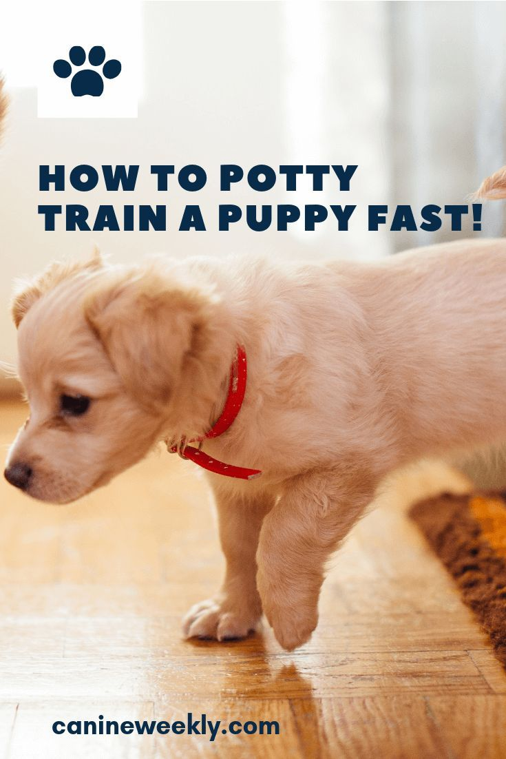 Learn How To Potty Train A Puppy Fast Canine Weekly Potty Training Puppy Puppy Training Training Your Puppy