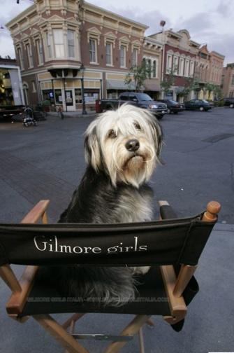 Gilmore Girls #GilmoreGirls Paul Anka - the dog
