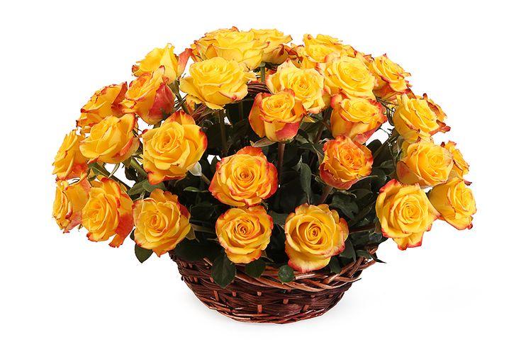 Букет в корзине 41 роза. Композиция Корзина из Роз Мари Клер ( Marie Claire) 50 см. (Эквадор)