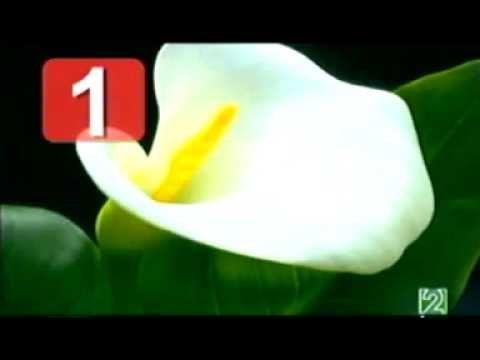 el numero divino ( el numero divino de fibonacci) - YouTube