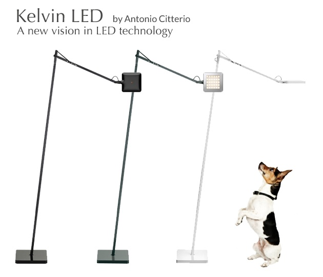 KELVIN LED now available as a floor lamp! (doggy not included...)