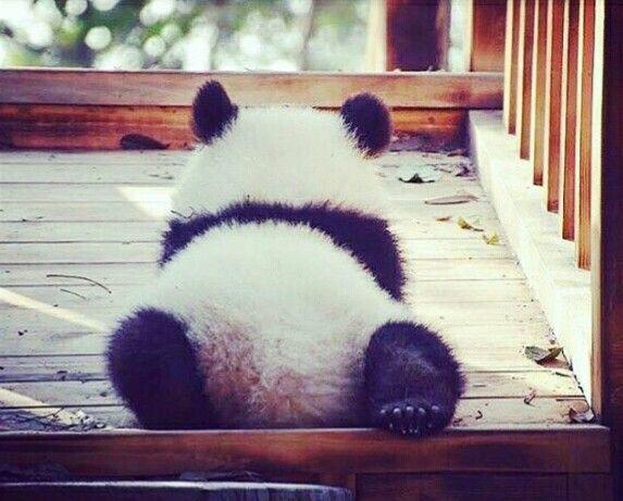 Cute lil panda bum!