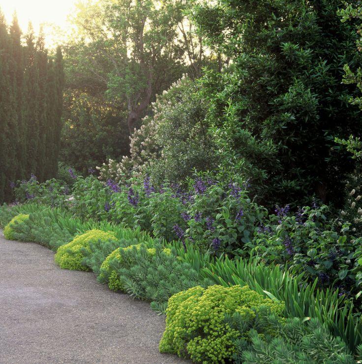 hanging out mediterranean garden perennial plant landscape design garden design perennials grasses gardens landscaping