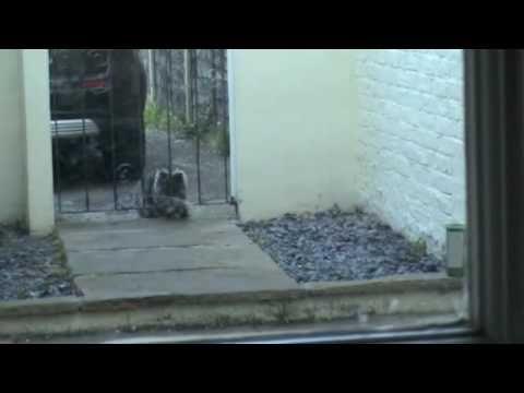Απωθητική Συσκευή Mega-Sonic Repeller για Γάτες και Σκύλους < Απωθητικά - Παγίδες < Υλικά Κήπου | ΦΥΤΩΡΙΑ ΑΝΤΕΜΙΣΑΡΗ