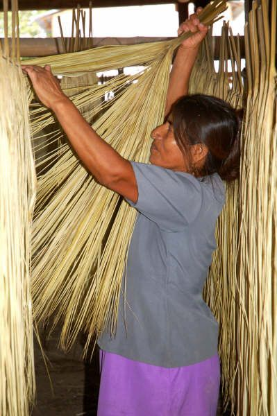 Drying and cooking the Toquilla straw is a female dominated field in the cost of Ecuador. That can be done while they stay at home with the kids.  So all the Panama hats straws are initially hand picked, cooked and dried by female hands. Proud Supporters of Females and Family.