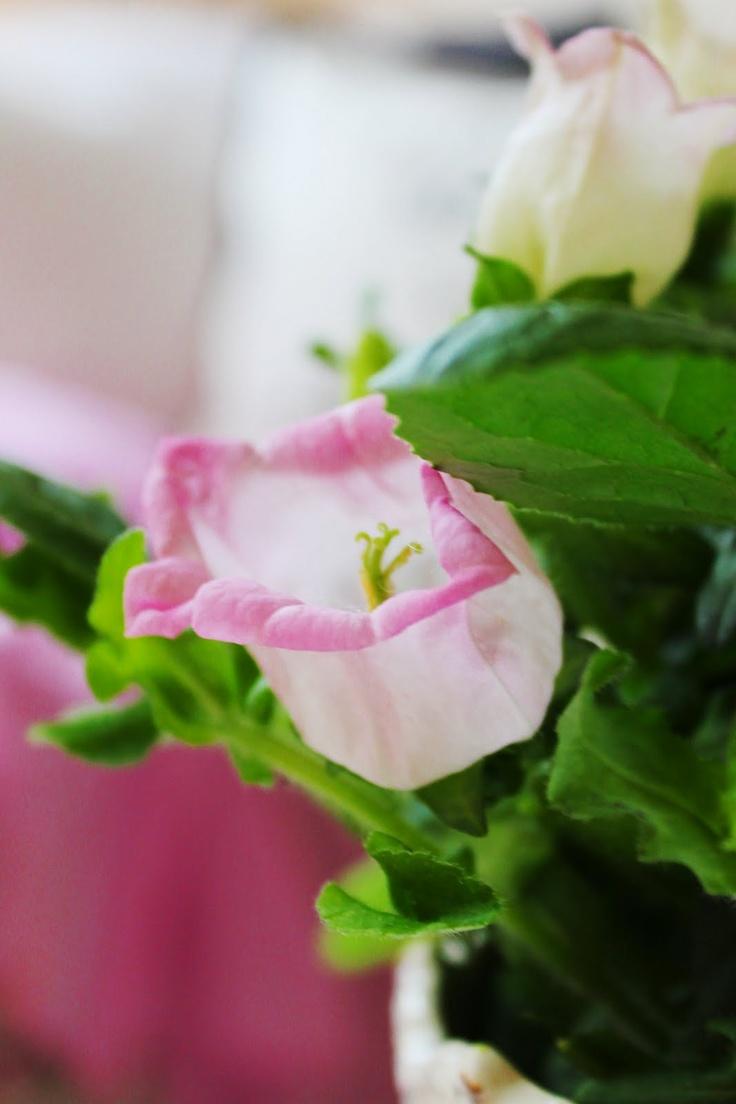 reverencia: Outdoor Plants