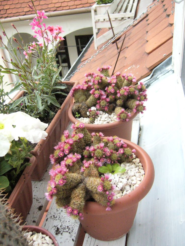 """""""my prickly friends"""""""