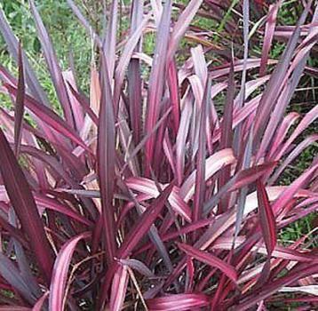 1000 id es sur le th me plante vivace sur pinterest for Plante ombre exterieur