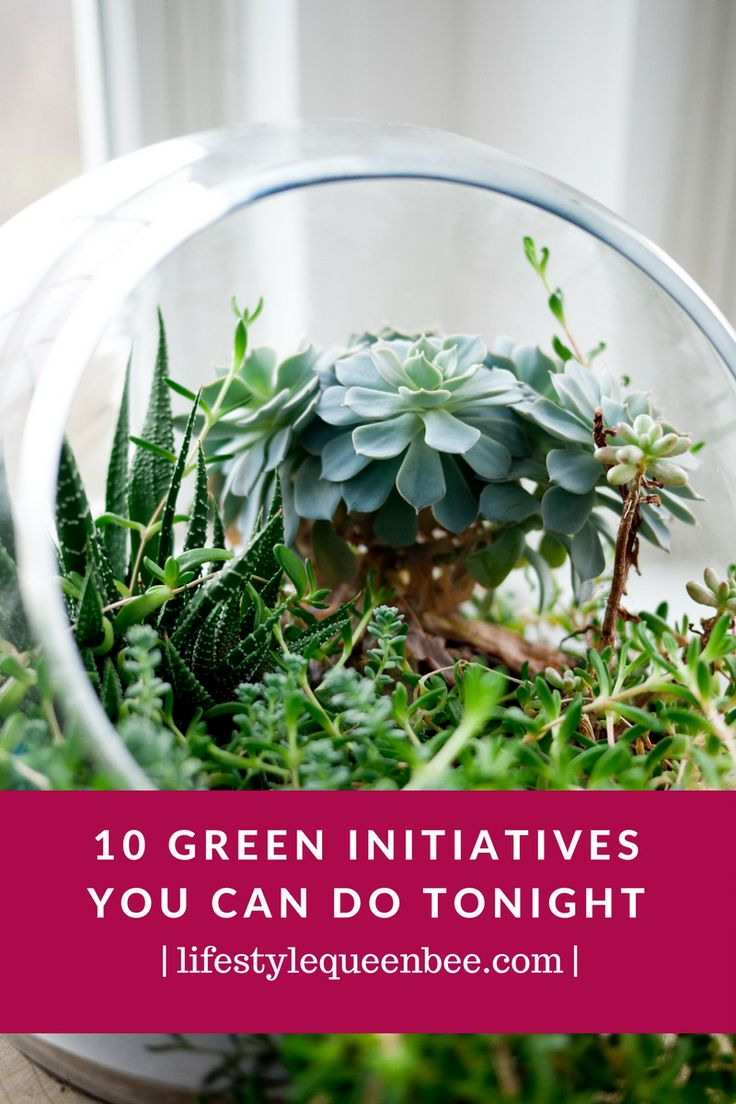 10 Green Initiatives You Can Do Tonight | Lifestyle Queen Bee