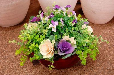 kusakiの「この植物をお買い!」の画像