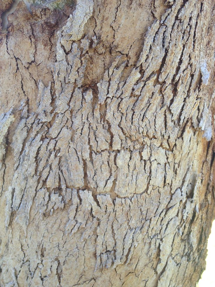 Tree bark outside the science room, 601. Macro mode turned off, exposure 1.0. The ISO 200, white balance turned off. This photo is good because of the rough texture of the bark peeling away from the tree, you can see some have been peeled off completely and some that are nearly about to fall. I also like how you can see each and every detail on the tree.