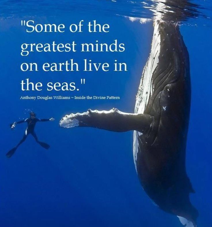 We've only scratched the surface of realizing the intelligence of whales & dolphins. For all we know, they could actually be our intellectual superiors.