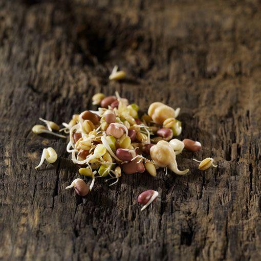 KIEMMIX  Deze rijke mix van verschillen soorten kiemgroenten heeft een nootachtige smaak. De kiemmix bevat de volgende kiemen; adzuki, linzen, kikkererwten, mini taugé en tarwe. Door de aanwezigheid van de vele kiemen is de mix erg gezond, maar bovenal erg eiwit- en vezelrijk.