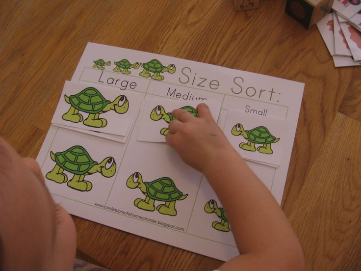 turtle size sort 1024x768 10 Preschool Math Activities (the Letter T)