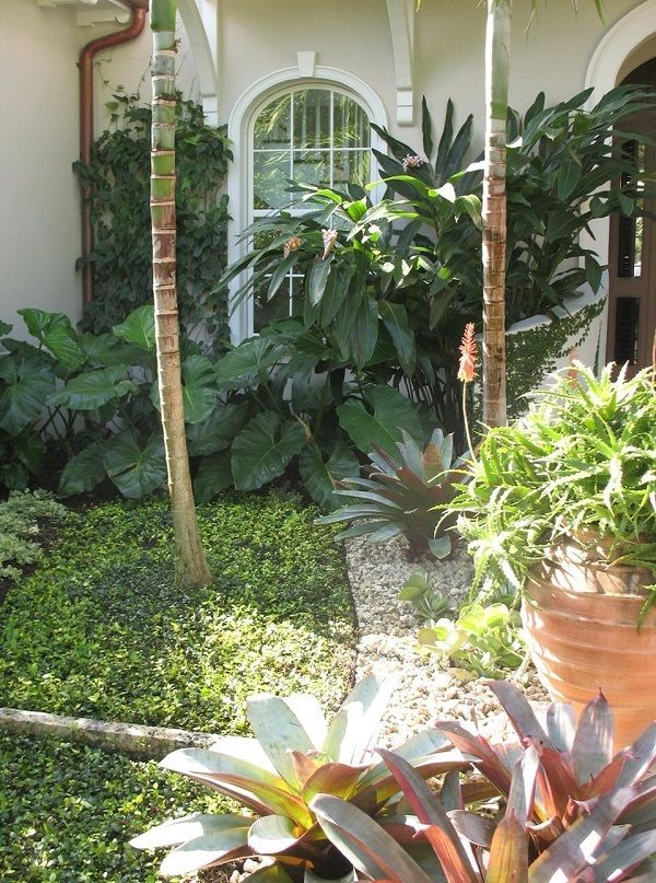 4302 best Tropical design images on Pinterest Gardens Tropical