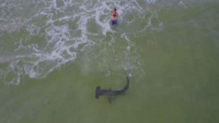 Fisherman reels in hammerhead shark off Florida beach, drone video shows