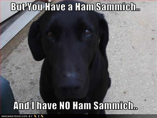 Oh the eyes!: Laughing, Sandwiches, Stuff, Puppies Dogs Eye, Pet, Hams Sammich, Funnies, Funny Animal, Black Labs