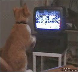 17 Dumb Animals Who Think the TV is Real from GifGuide