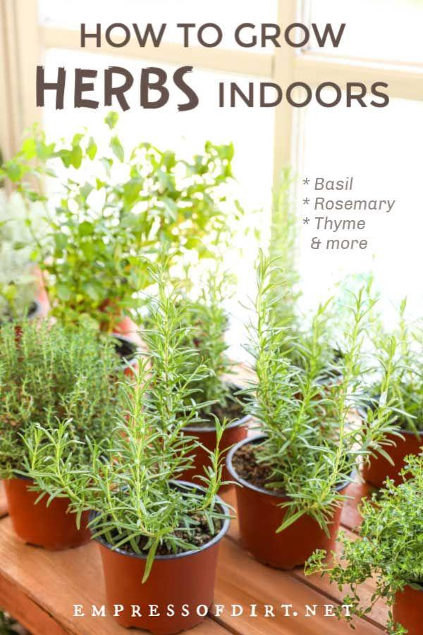 How To Grow Herbs Indoors Beginner S Guide In 2020 Herbs