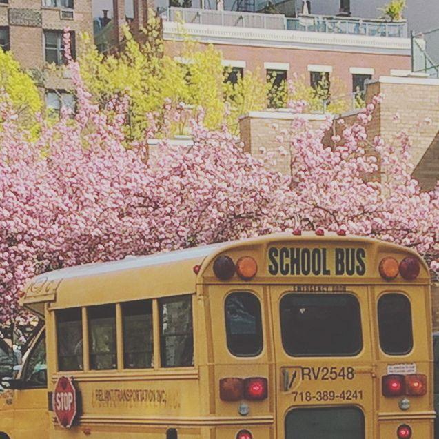 School bus • New York city . . . #nycity #nyc #newyork #newyorkcity #america #usa #exploringtheglobe #explore #exploring #neverstop #travelgram #travelingram #ny #traveler #schoolbus #spring #blossom