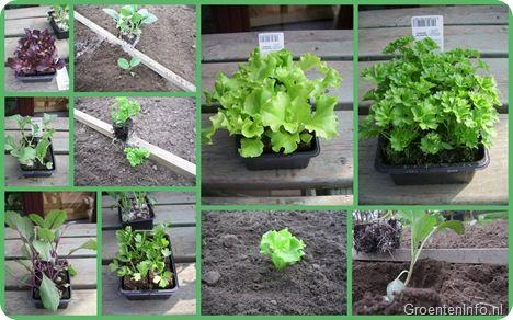 De groentetuin in april : plantjes kopen?