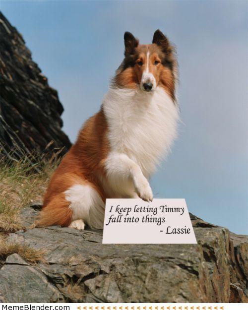 MOAR! Funny Pic – Public Shaming Dog Shaming – Partners in Crime Dog Shaming – I pooped inside Dog Shaming – Time Out Dog Shaming &