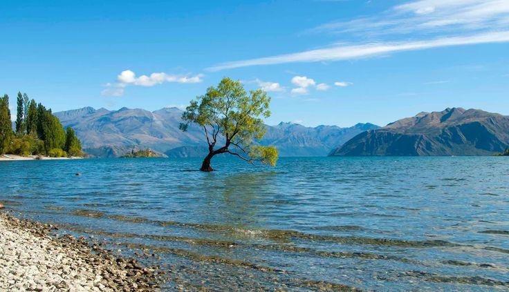 Lake Wanaka Wedding   New Zealand Dream Weddings