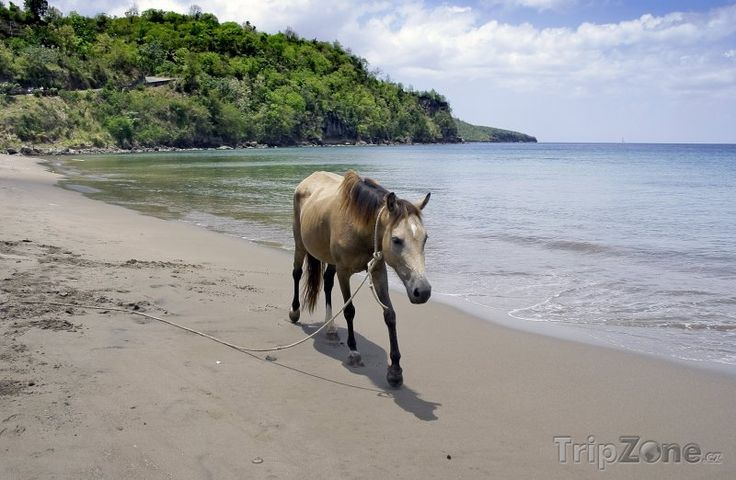 Kůň na pláži (Svatá Lucie)