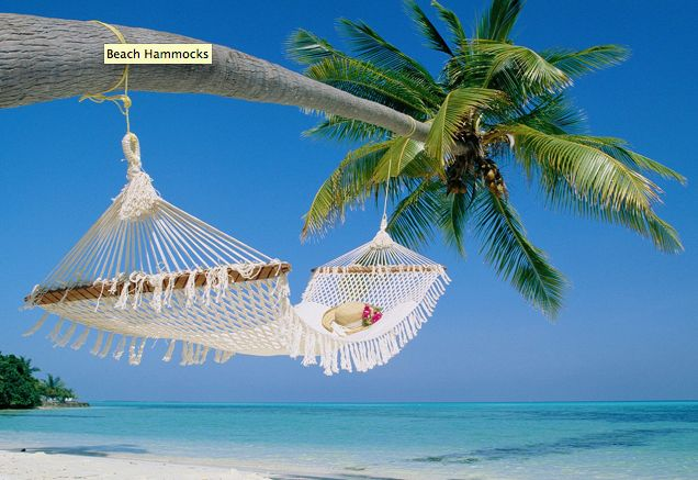 Yes.Beach Wallpaper, Dreams, Hammocks, Palm Trees, Best Quality, Travel, Places, Palms, Heavens