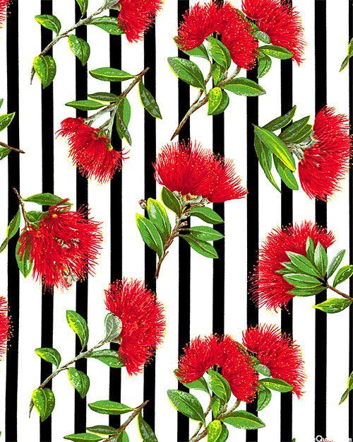 New Zealand Import - Pohutukawa Wonder Stripe - White
