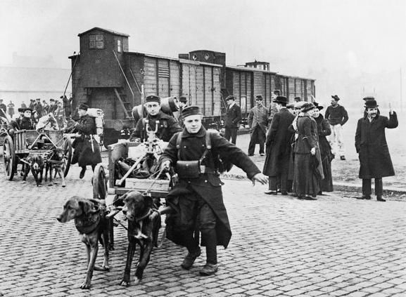 ANIMALS WAR 1914 - 1918 (Q 48445) Transport Animals: Dogs drawing carts containing machine guns and supplies of the Belgian army leave for the front line.