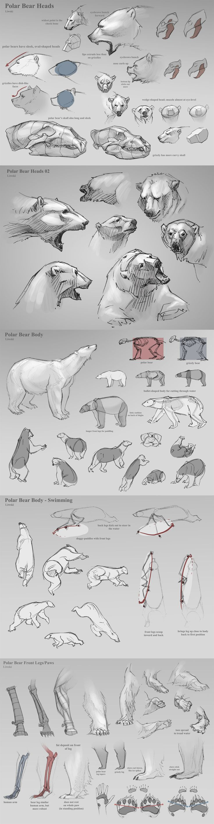 #bears #drawing #tutorial                                                                                                                                                      Más