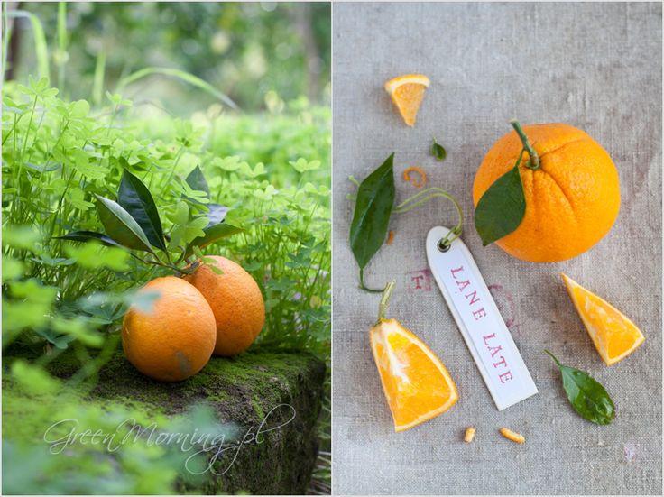 Lane late orange fruit pomarańcza