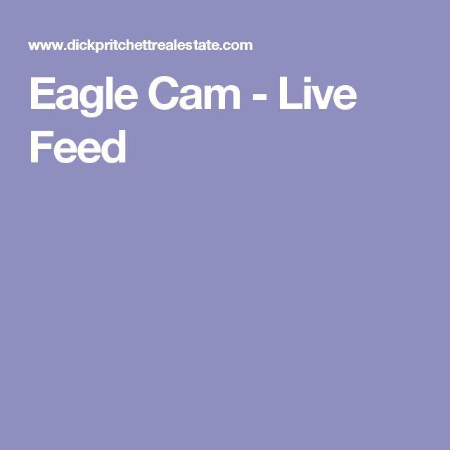 Eagle Cam - Live Feed