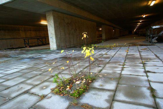 Övergivna platser - Kymlinge/Slagsta