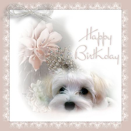 Happy Birthday Puppy Pictures Funny Images 26814wall.png