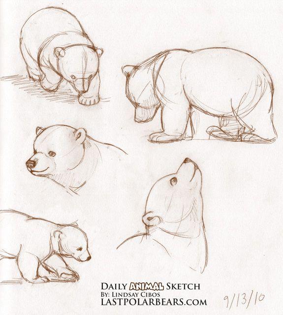 Risultato della ricerca immagini di Google per http://www.lastpolarbears.com/wp-content/uploads/2010/09/Daily_Animal_Sketch_045.jpg