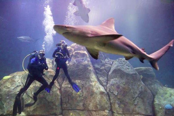 Camden aquarium google search shark week pinterest Atlantic city aquarium hours