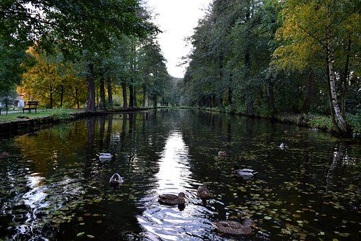 Rybník, Kachny, Duck, Pták, Divoká