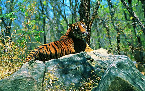 endangered species of wildlife in india pdf