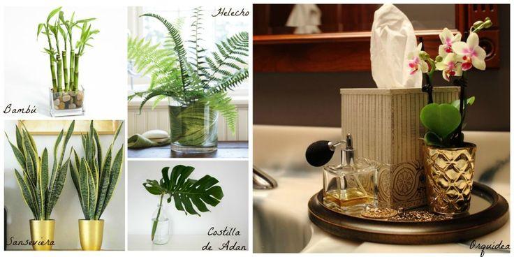 las-mejores-plantas para-el-baño