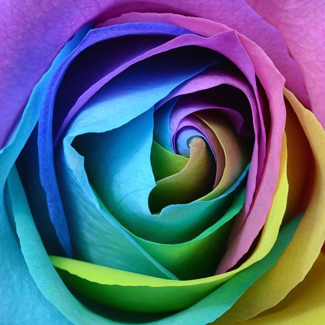 Learn The Language Of Flowers Every Flower Has A Different Meaning Make Sure Your Flowers Are Telling Yo Rose Color Meanings Rose Flower Photos Rainbow Roses